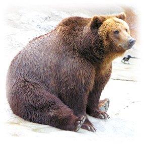 лечение кашля медвежьим жиром