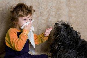 аллергия у детей на шерсть животных