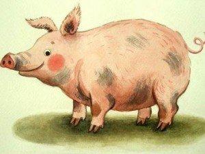 свинья и ее жир